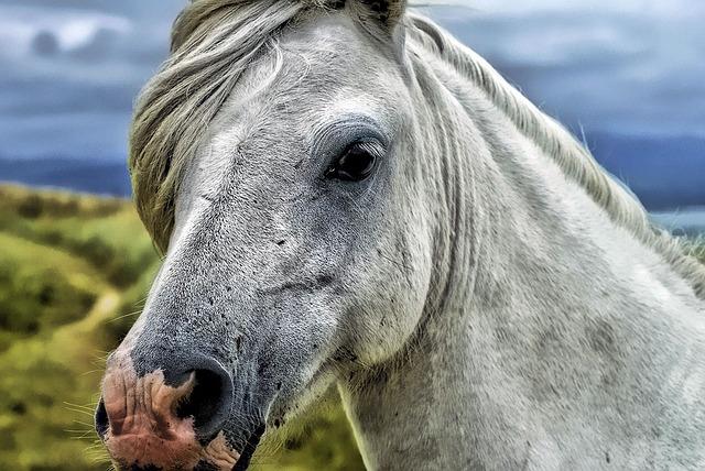 Horse, Animal, Mammal, Mare, Equine, Female Horse