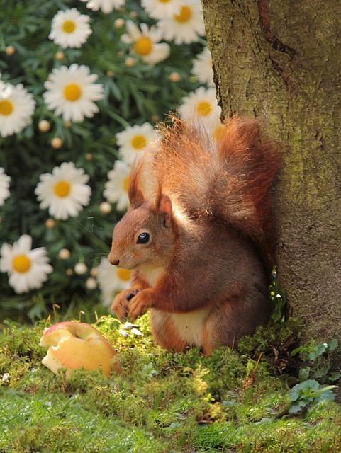 Animal, Mammal, Rodent, Squirrel