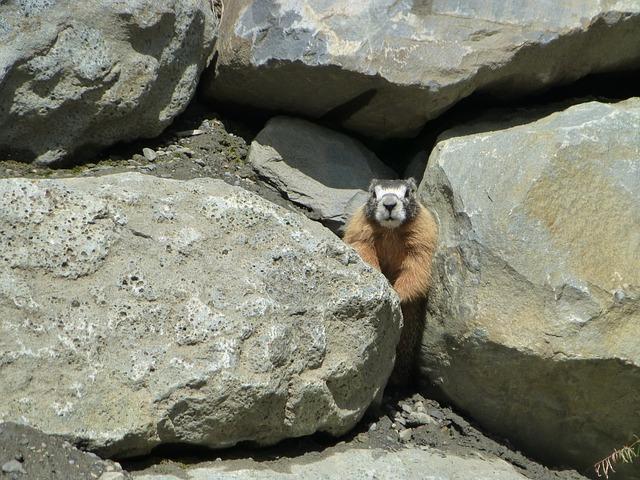 Ground Squirrel, Rodent, Mammal, Animal, Wild Life