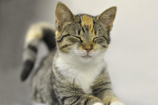 Animal, Cute, Cat, Mammal, Pet, Kitten, Young, Small