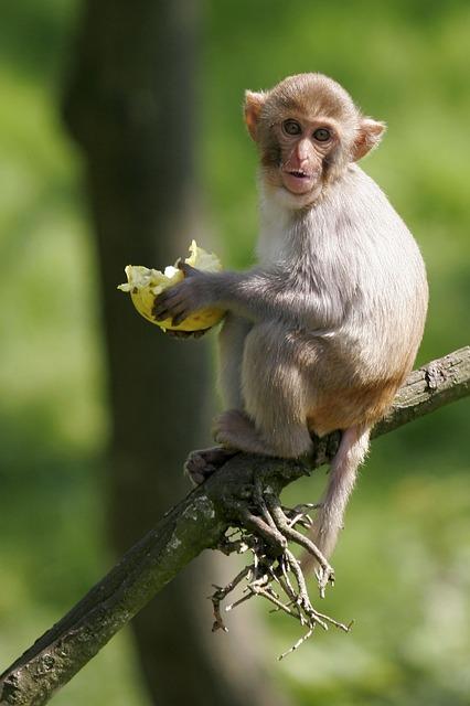 Fauna, Monkey, Nature, Animal