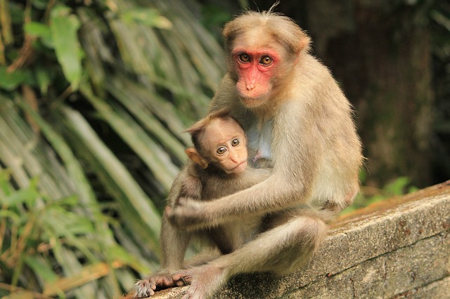 Monkey, Nature, Primate, Cute, Wildlife, Animal, Young