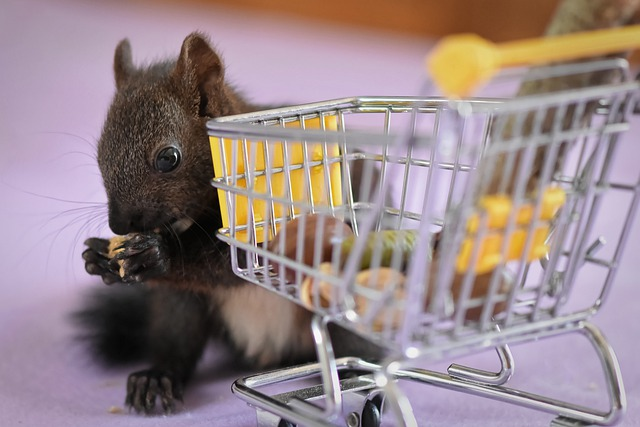 Squirrel, Nager, Shopping Cart, Funny, Cute, Animal