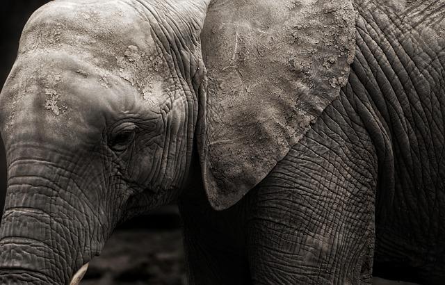 Elephants, Animal, Africa, Safari, Natural, Wildlife