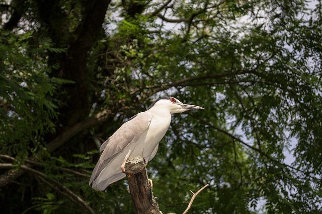 Ave, Passaro, Nature, Brasil, Animal, Tropical, Bird
