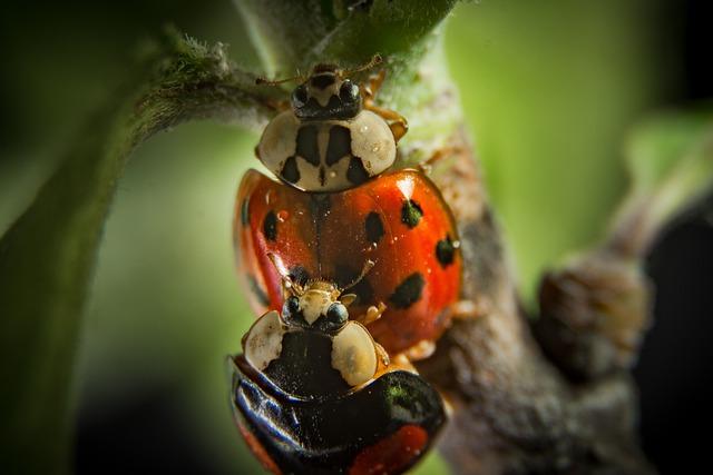 Insect, Nature, Beetle, Animal World, Animal