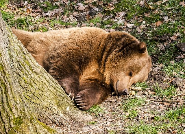 Bear, Brown Bear, Animal, Mammal, Nature