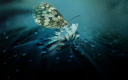 Nature, Butterfly, Animal, Animal World