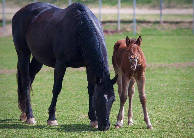 Foal, Mare, Colt, Equine, Horse, Animal, Nature, Farm