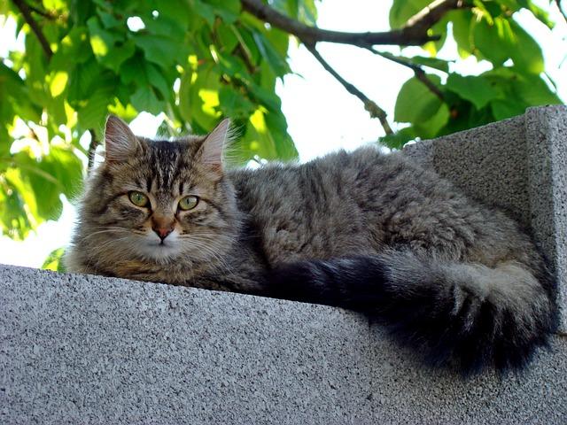 Cute, Cat, Animal, Mammal, Nature
