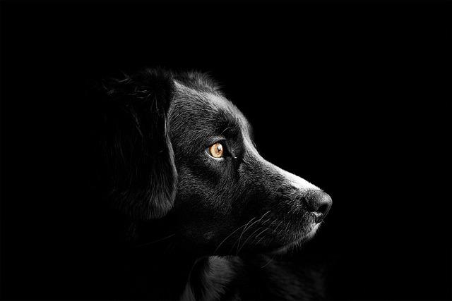 Dog, Cute, Puppy, Animal, Pet, Nature, Black, Art