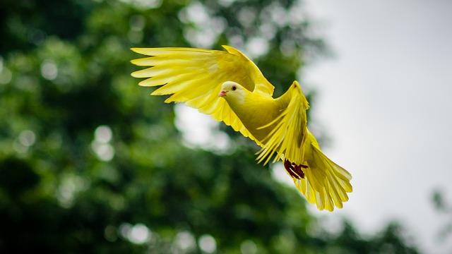 Dove, Animal, Bird, Wing, Nature