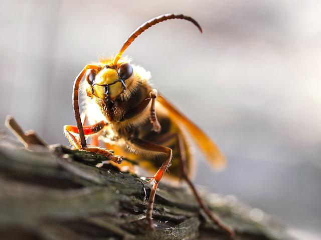 Hornet, Insect, Nature, Animal