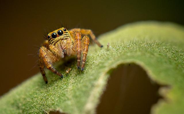 Nature, Insect, Animal, Wildlife, Leaf, Spider, Closeup