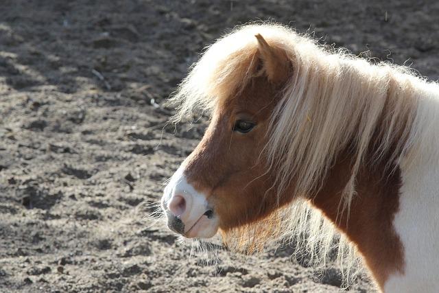 Pony, Portrait, Animal, Nature, Horse, Mammal