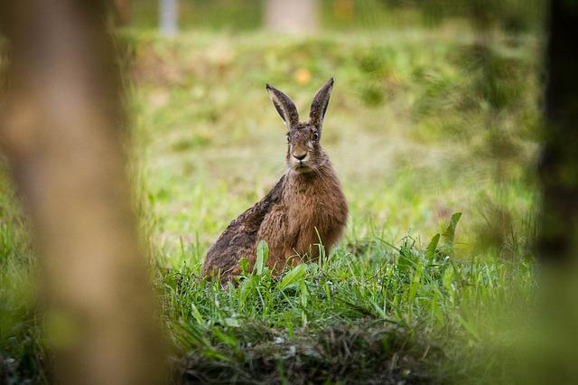 Hare, Nature, Meadow, Bunny, Animal, Green, Summer