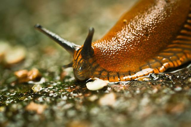 Snail, Animal, Nature, Mollusk, Slug, Garden, Slowly