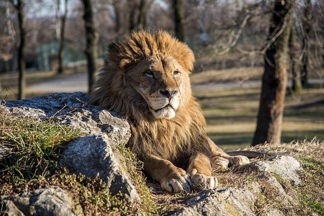Animal, Lion, Travel, Park, Nature