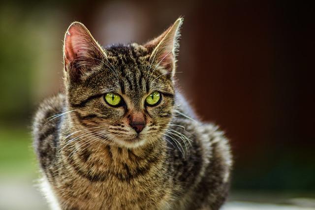 Animal, Cute, Cat, Pet, Portrait, Looking, Nature, Sit