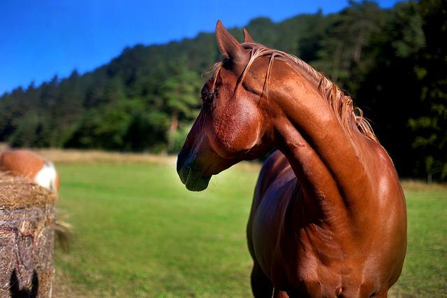 Horse, Stallion, Mare, Pasture, Nature, Animal