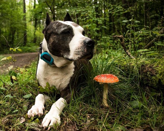 Nature, Dog, Animal, View, Man's Best Friend, Pet