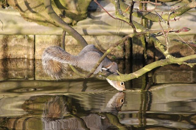 Nature, Water, Animal, Squirrel