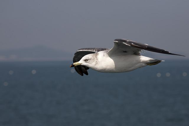 New, Sea, Nature, Seagull, Beach, Animal, Wing