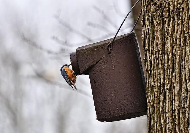 Robin, Bird, Animal, Wildlife, Nesting Box, Tree, Trunk