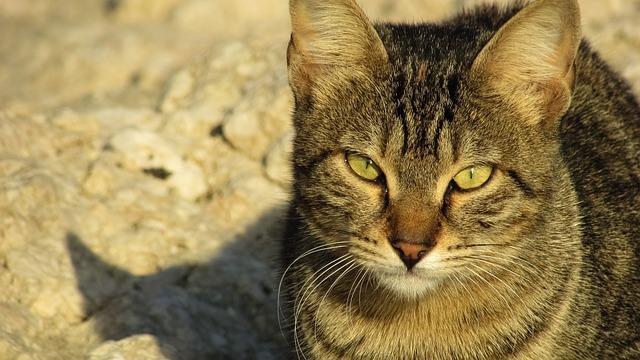 Cat, Stray, Animal, Cute, Outdoor, Eyes, Face, Kitten