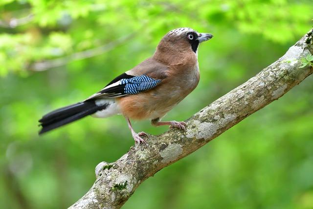 Wild Animals, Bird, Natural, Outdoors, Animal, Box