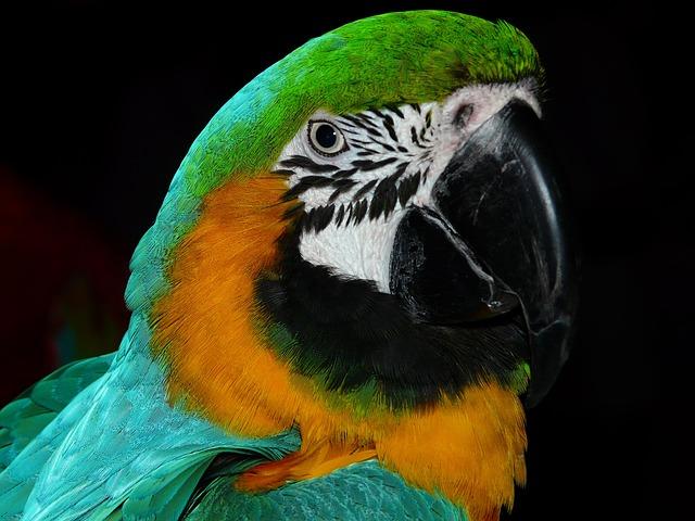 Bird, Animal, Parrot, Plumage, Wildlife, Fauna