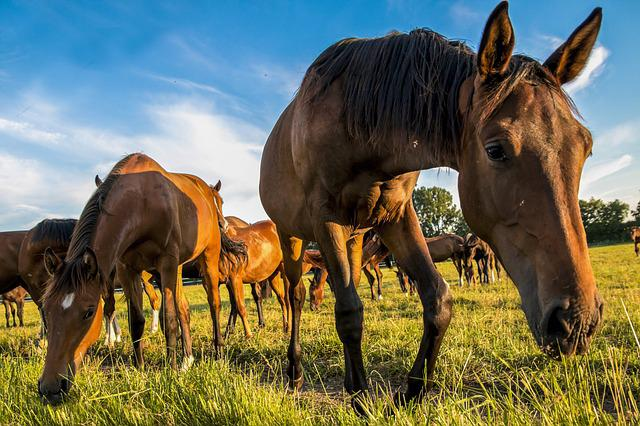 Horses, Meadow, Animal, Nature, Pasture, Foal, Brown