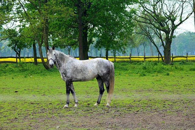 The Horse, Animal, Catwalk, Pasture Land, Landscape