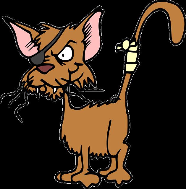 Cat, Animal, Injured, Hurt, Fighting, Patch, Pet