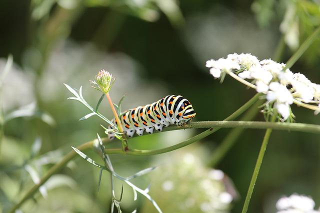Caterpillar, Colorful, Pattern, Animal, Points, Plant