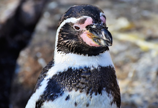 Penguin, Bird, Water Bird, Animal, Animal World, Bill