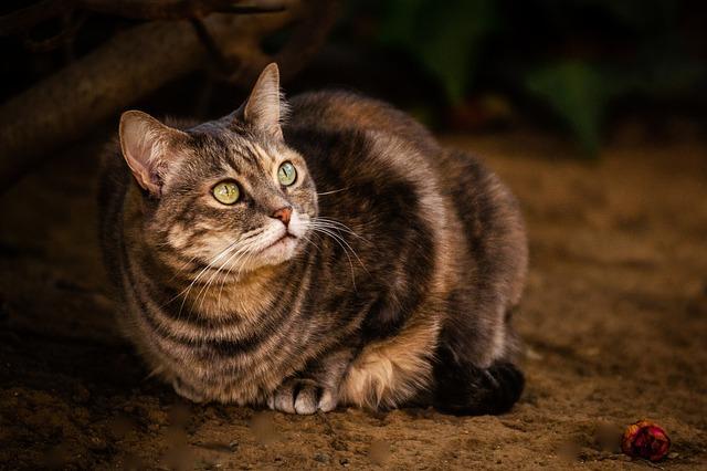Mammal, Cute, Portrait, Cat, Animal, Eye, Pet