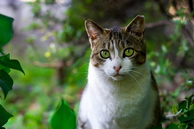 Cat, Pet, Animal, Feline, Green Animals, Green Pets