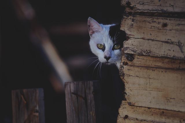 Animal, Cat, Cute, Feline, Pet