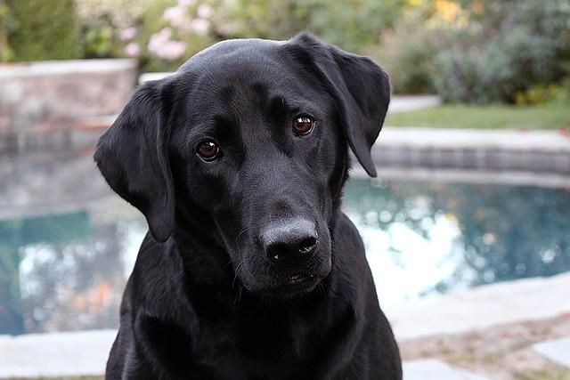 Dog, Animal, Pet, Domestic, Cute, Canine, Outside