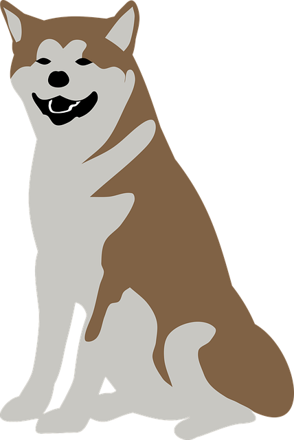 Animal, Dog, Malamute, Pet