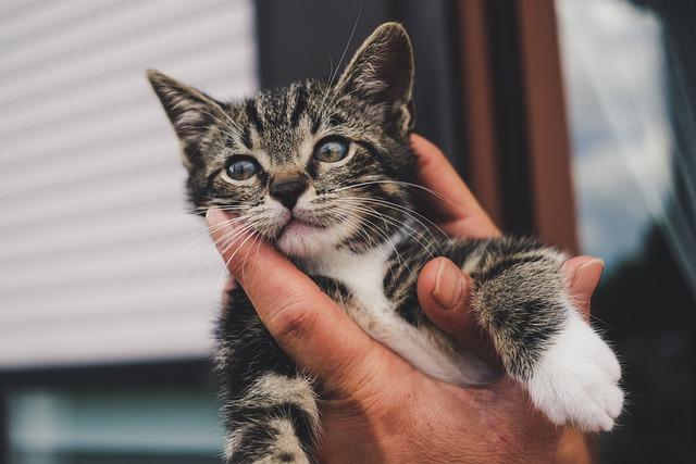 Cat, Kitten, Hand, Small, Eyes, Animal, Pet, Cute