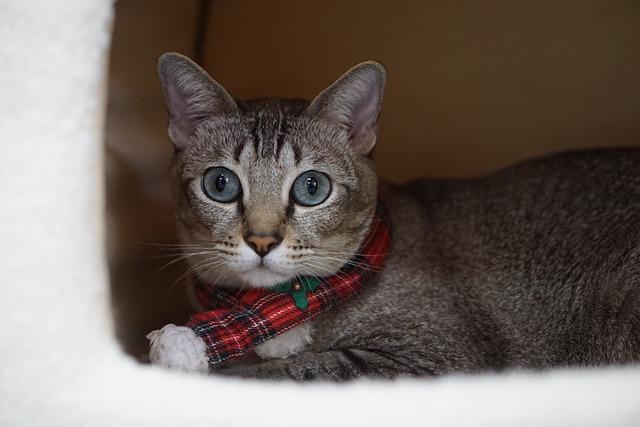 Animal, Cute, Pets, Cat, Mammal, Okinawa