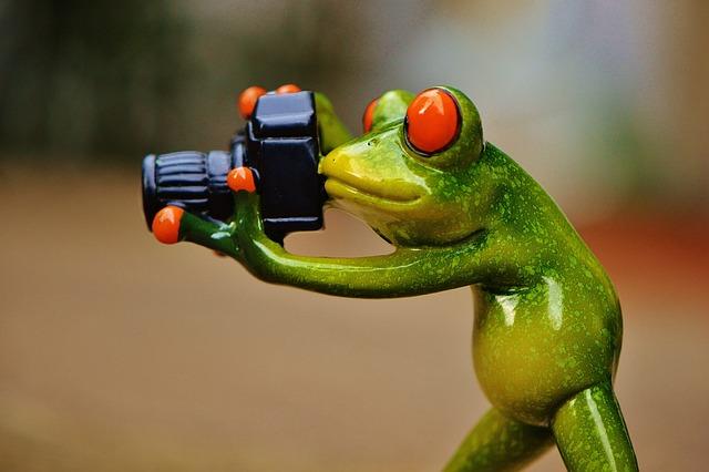 Frog, Photographer, Funny, Fun, Camera, Green, Animal