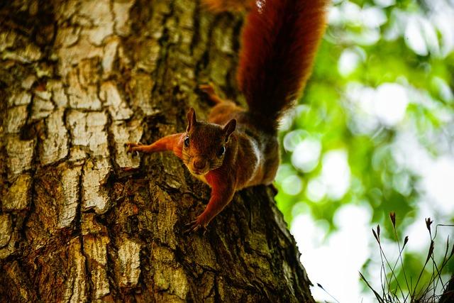 Animal, Animal Photography, Animal Portrait, Animals