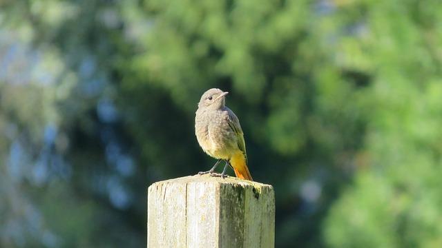 Bird, Pile, Animal, Close