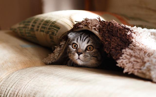 Pillow, Case, Blanket, Cat, Animal