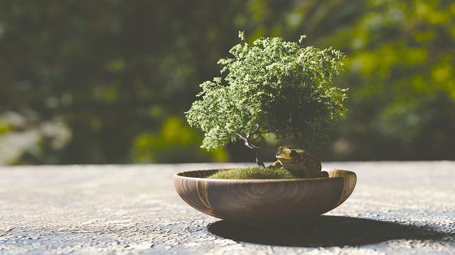 Bonsai, Tree, Frog, Plant, Animal, Jump