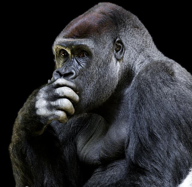 Animal World, Monkey, Gorilla, Ape, Animal Portrait