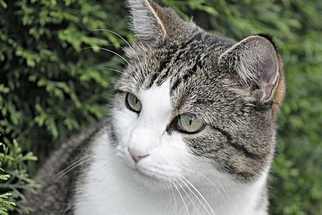 Cat, Portrait, Animal, Kitten, Domestic Cat